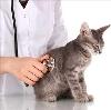 Ветеринарные клиники в Слободском